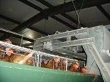 Matériel complètement automatique de cage de poulet de couche d'exploitation d'élevage