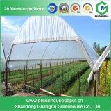 Serre chaude de film plastique pour la plantation de tomate et de concombre