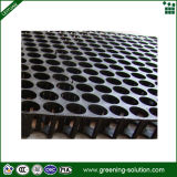 Più nuovo Green Roof Internal Drainage Sheet con High Qulaity