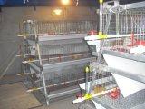가금 농기구 또는 어린 암탉 (작은) 닭 감금소 시스템