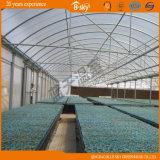 Multi-Span Plastic ampiamente usato Film Greenhouse per Seeding