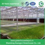 최고 가격 온실 제조자 Economial PC 장 정원 온실