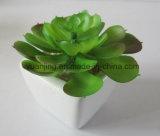 Succulents artificiales del seguidor de la alta calidad para el regalo/la decoración