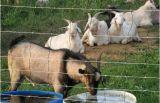 電流を通された農場の塀の牛塀