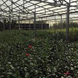 Estufa agricultural da Multi-Extensão PC/Glass para o vegetal