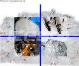 Máquinas de hielo competitivas del tubo (IT25T-R4W)