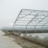 Baixo Cost Prefab Steel Structure Poultry e Livestock House
