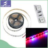 SMD5050 DC12V flexibler LED Streifen wachsen Weihnachtslicht