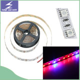 La luz de tira flexible de SMD5050 DC12V LED crece la luz