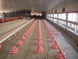 As aves domésticas abrigam/casas de galinha com equipamento