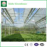 Huis van de multi-Spanwijdte van de plastic Film Hydroponic Groene voor Groente