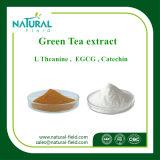 Het groene Uittreksel EGCG 40%, 90%, 95%, 98% van de Thee