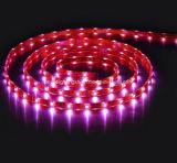 24VDC maak RGB LEIDENE SMD5050 Licht van de Strook waterdicht