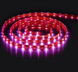 24VDC imprägniern SMD5050 RGB LED Streifen-Licht