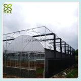 Chambre verte de film hydroponique solaire tropical