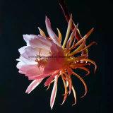Greensource, film de transfert thermique pour de belles fleurs