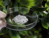 味およびFrgranceのための96%純度の自然なDボルネオール464-43-7