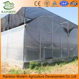 Equipos de Agricultura Multi-Span Po Invernadero de Película para la venta