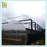 Commercial Venlo Film Green House for Flower Planting