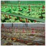 Автоматическое оборудование цыплятины бройлера с свободно конструкцией сарая конструкции & Prefab