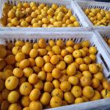 Qualidade superior de mel fresco Mandarim