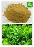 純粋な有機性生物緑茶のエキス