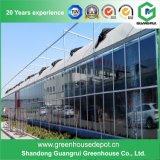 Fabricante de cristal del invernadero del precio de fábrica con el sistema de ventilación
