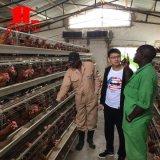Оборудование фермы цыпленка высокого качества автоматические и клетка Chicekn