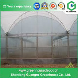 Serre chaude en plastique d'envergure multi d'agriculture pour la plantation