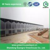 구타 가격 폴리탄산염 장 녹색 집 PC 온실