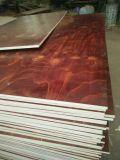la película del pino de la talla 3X6 hizo frente a la madera contrachapada para la construcción