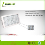 900W 1000W 1200Wの高い発電LEDのプラントは温室のために軽く育つ