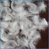 Gewaschene weiße oder graue Ente versehen unten mit Federn