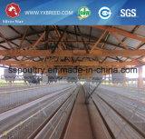 Silberne Stern-Geflügel-Geräten-Huhn-Rahmen für Schicht und Bratrost