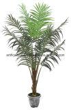 طبيعيّ اصطناعيّة استوائيّة شجرة كوثل [بلم تر] تقريبا
