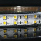5050二重線120/144LEDs R/G/B/W/Ww/Y LEDのストリップの極度の明るさ