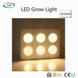 크리 사람 칩 LED는 실내 플랜트 & 꽃을%s 가볍게 증가한다