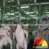 家禽の屠殺場の家禽の屠殺機械を完了しなさい