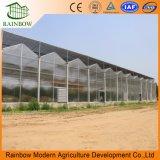 Invernaderos transparentes de alta calidad de hoja de policarbonato para la agricultura