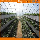 채집 정원으로 이용되는 필름 태양 온실