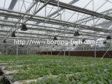 Agricultural Multispan Glass Greenhouse