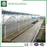 Agriculture/serre chaude commerciale de tunnel de film de PE pour la fraise/Rose