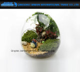 妖精の庭の装飾の卵の整形明確なガラスつぼの陸生動物飼育器