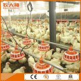 Équipement automatisant d'élevage de volailles pour le poulet-chef