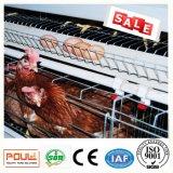 Клетки цыпленка слоя в доме цыплятины с низкой ценой