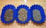 Compaginador caliente del color del grano de café de Sri Lanka de la venta