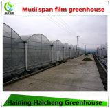 Qualität Plastik-Film Gewächshaus für Pflanzen
