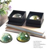 Paperweight di vetro della cupola della radura alla moda del ricordo per il regalo di cerimonia nuziale Hx-8353