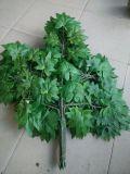 庭の景色によって模倣されるアメリカハナノキの木
