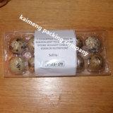3 etiquetas engomadas plásticas disponibles del papel de la bandeja del huevo de codornices de las carpetas 15holes